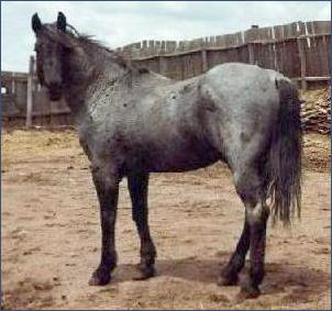 Horse Services